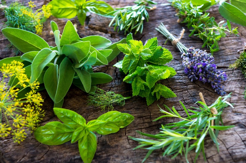 herbs and poor blood circulation