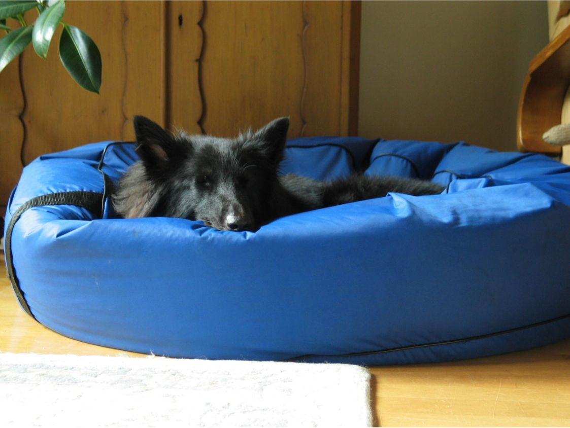 Not all heated dog beds are created with your best friend in mind. Some beds don't provide enough heat, provide too much heat, or cannot withstand the wear and tear of belonging to a dog.